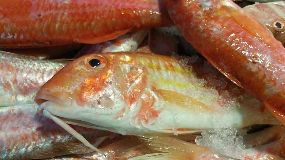 psaradiko.gr-φρεκα ψαρια-online